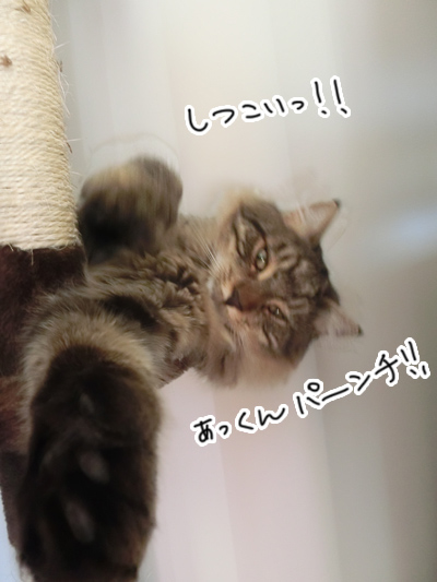 26062016_cat10.jpg