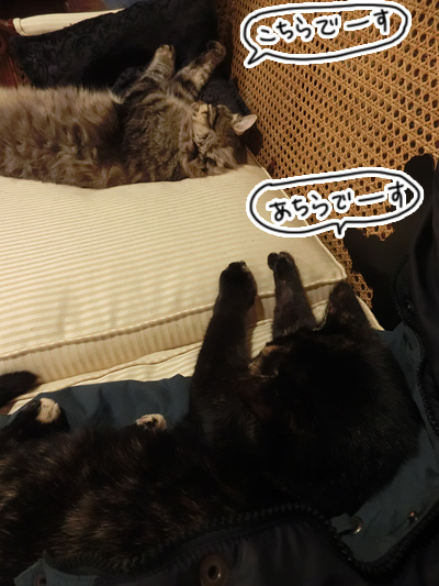 26062016_cat7.jpg