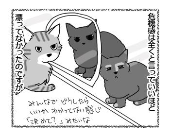 26072016_cat3.jpg