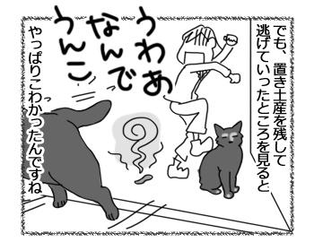 26072016_cat4.jpg