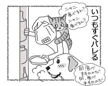 27062016_cat4.jpg