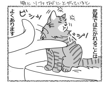 27072016_cat2.jpg