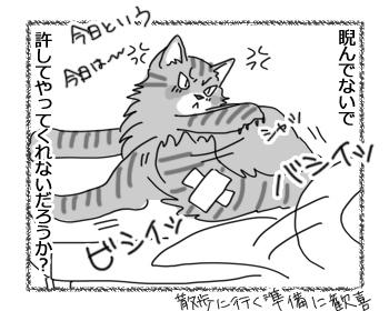 27072016_cat4.jpg