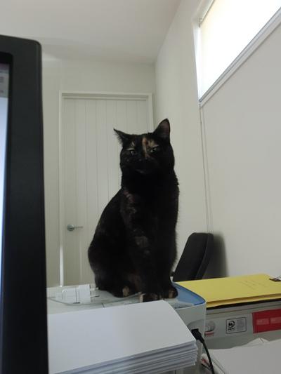 27072016_cat6.jpg