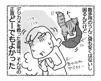 27082016_cat4.jpg
