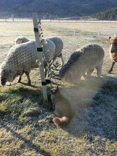 羊の国のびっぐふっと「カメラと言えば・・・」3
