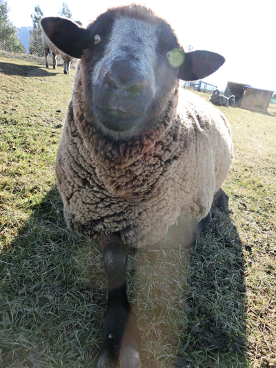 羊の国のびっぐふっと「カメラと言えば・・・」4