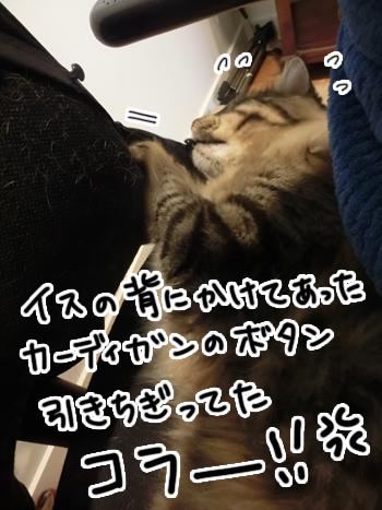 29062016_cat5.jpg