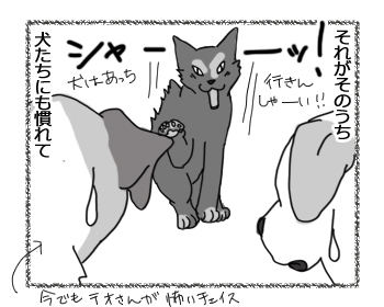 30052016_cat2.jpg