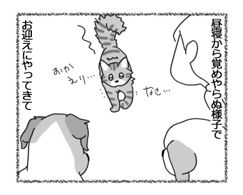 30062016_cat3.jpg