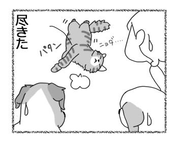 30062016_cat4.jpg