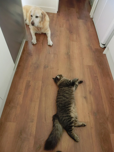 30062016_cat5.jpg