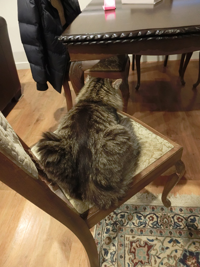 羊の国のビッグフット「猫ねこ、再発見!」4