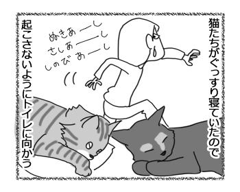 31052016_cat1.jpg