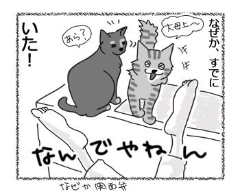 31052016_cat3.jpg