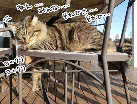 31072016_cat4.jpg