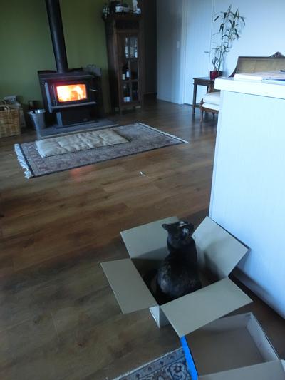 31082016_cat4.jpg