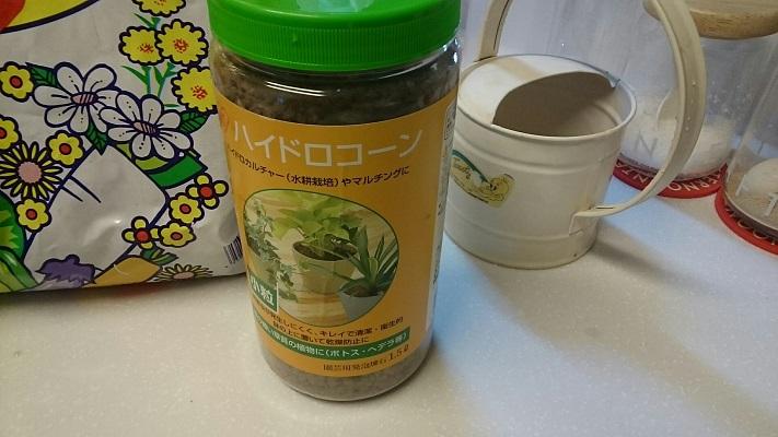 コーヒーの木ハイドロ