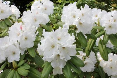 横須賀しょうぶ園 春の花