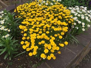 大丸の花壇_07