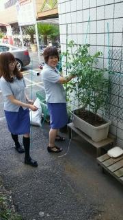 稲田堤店_ミニ菜園_002