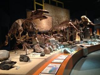 7恐竜の骨