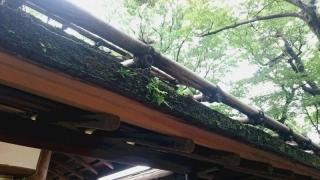 そばや屋根