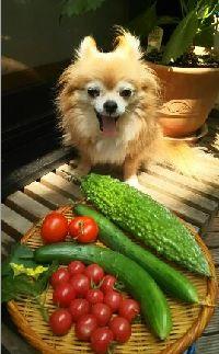 チーと野菜